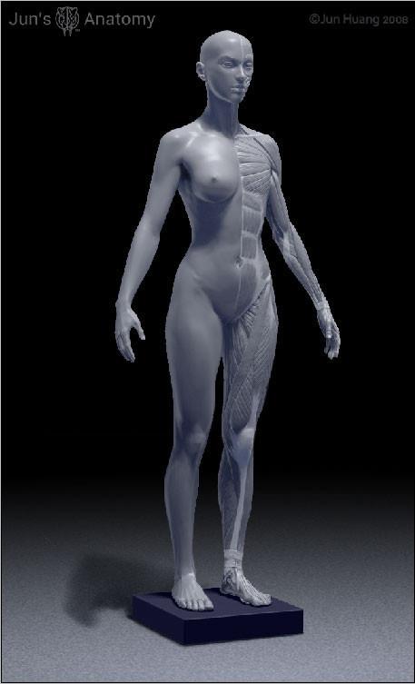 Jun Huang Human Female Anatomy Model