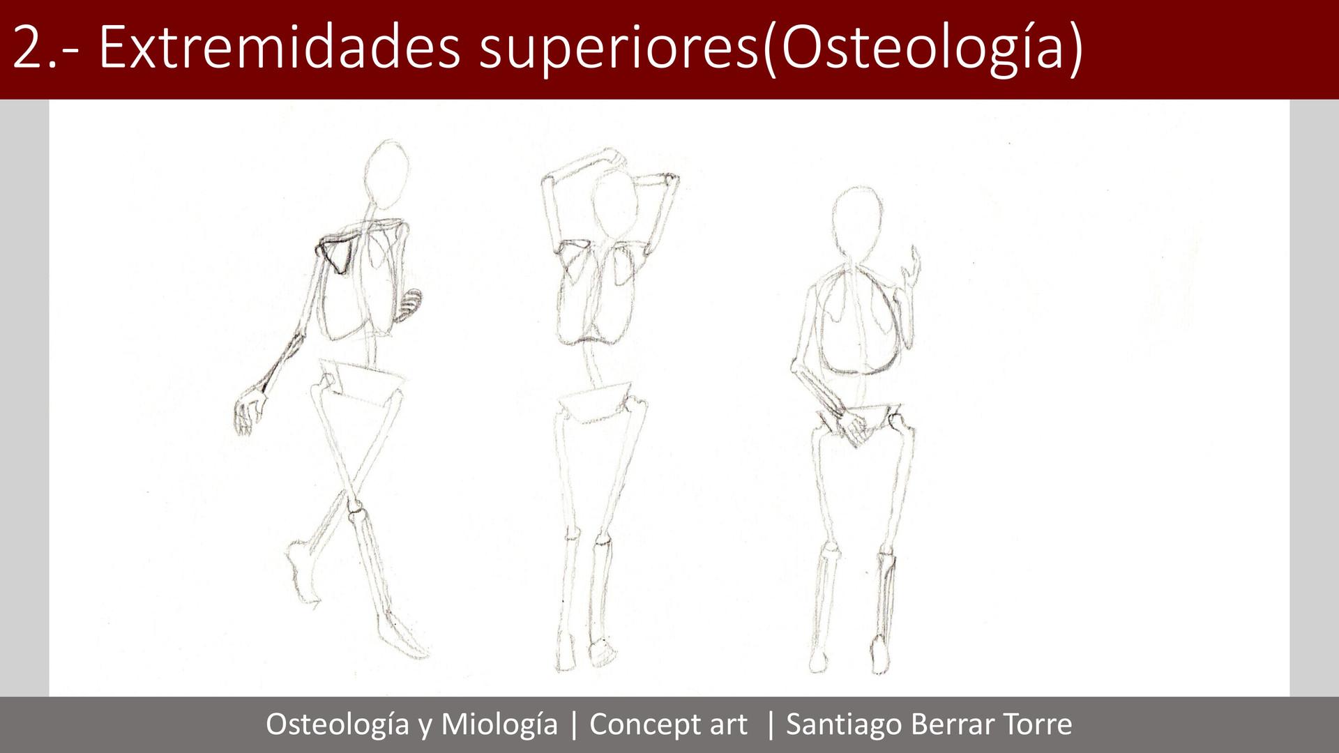 Asombroso Anatomía Notas De Las Extremidades Superiores Bosquejo ...