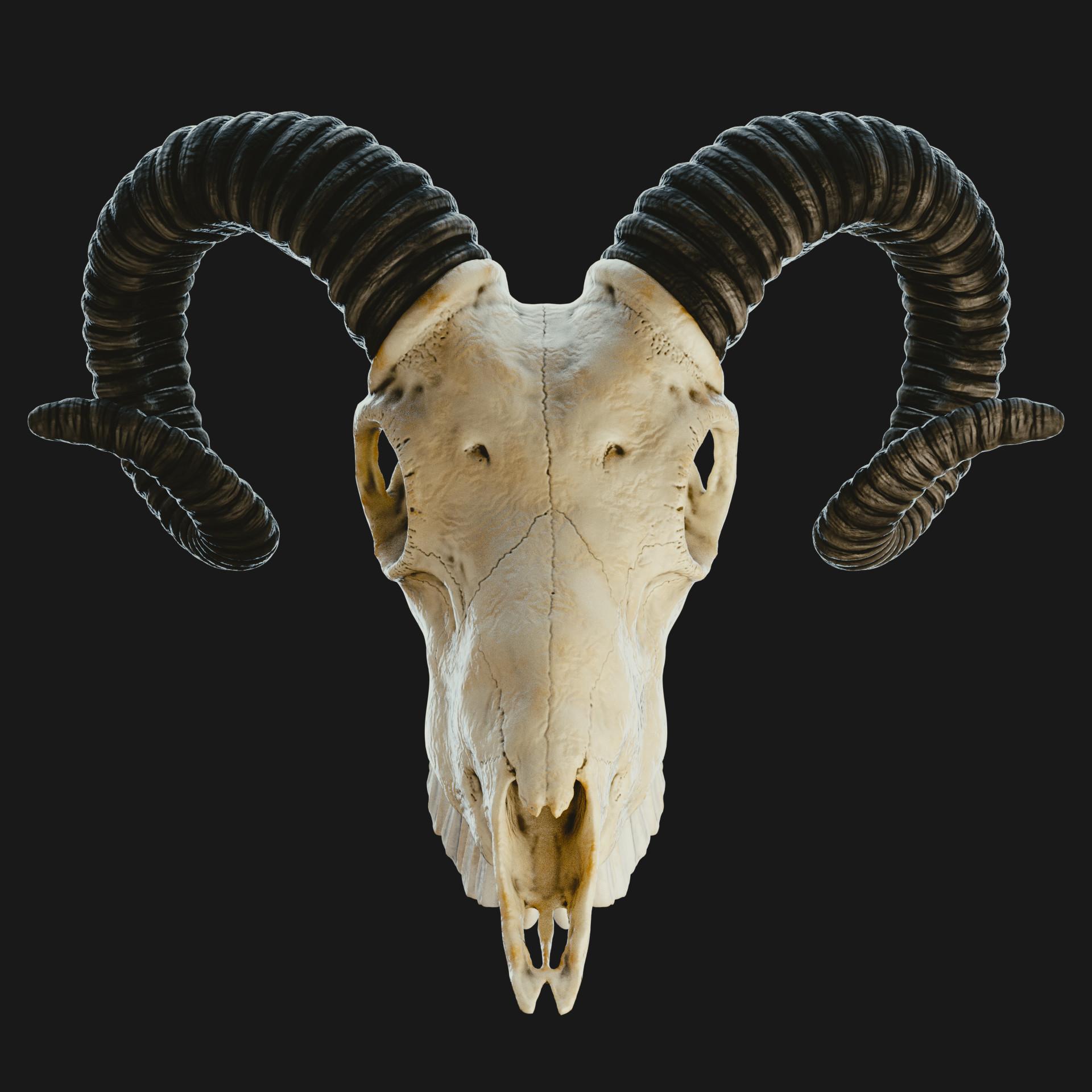 Artstation Goat Skull Sculpting Incl Tutorial