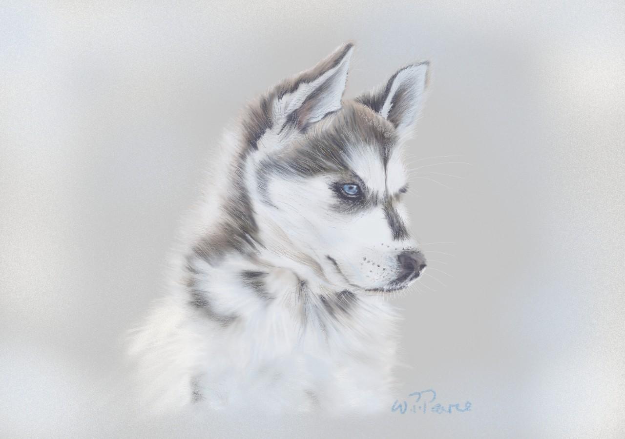 W Pearce Siberian Husky Sketch