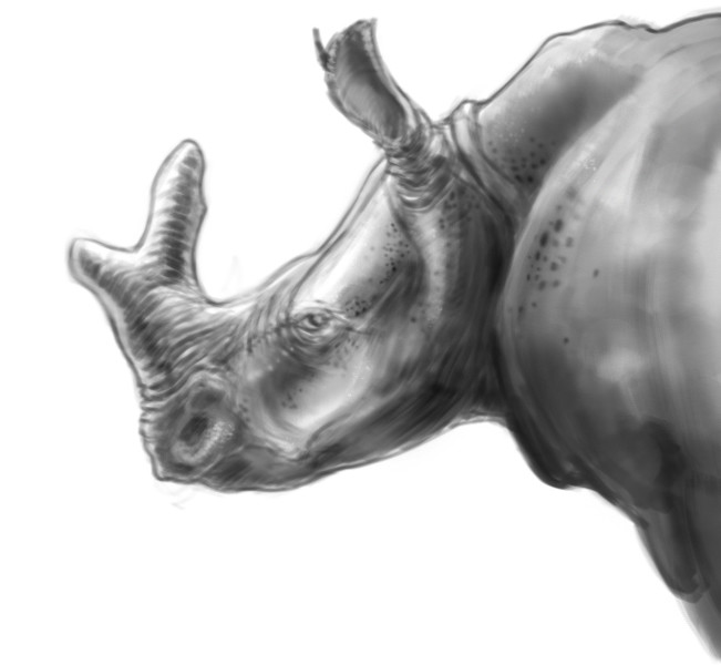 Adam milicevic rhino thing b