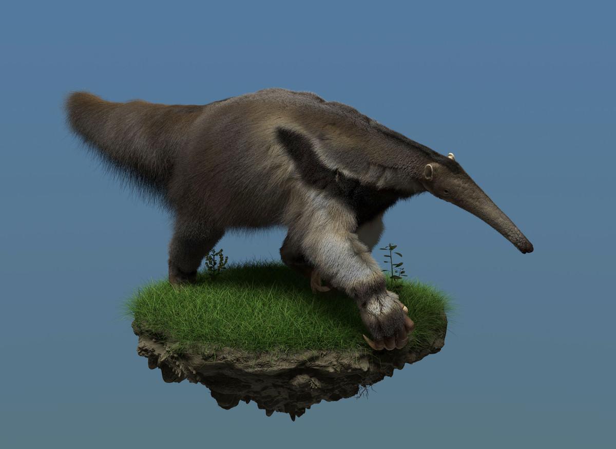 Zoltan korcsok zkorcsok anteater02 2