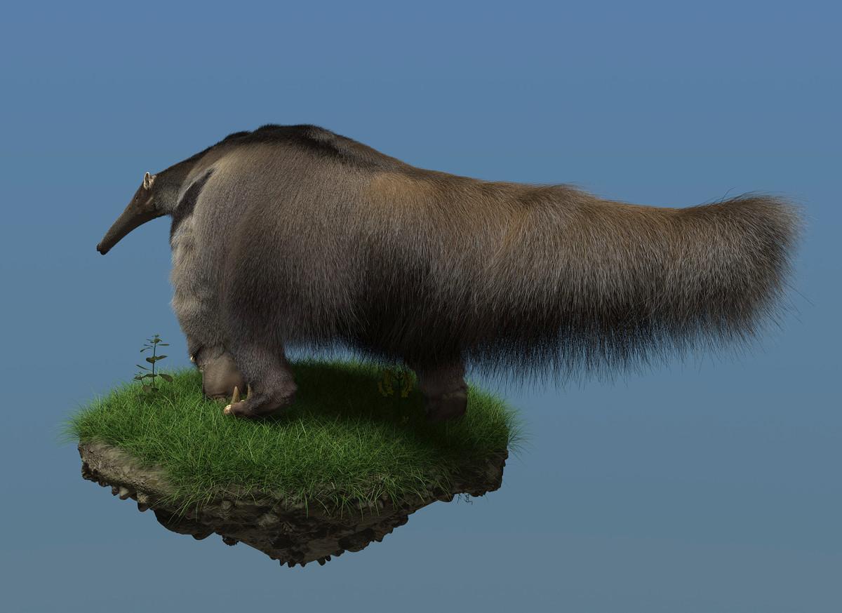 Zoltan korcsok zkorcsok anteater03 2