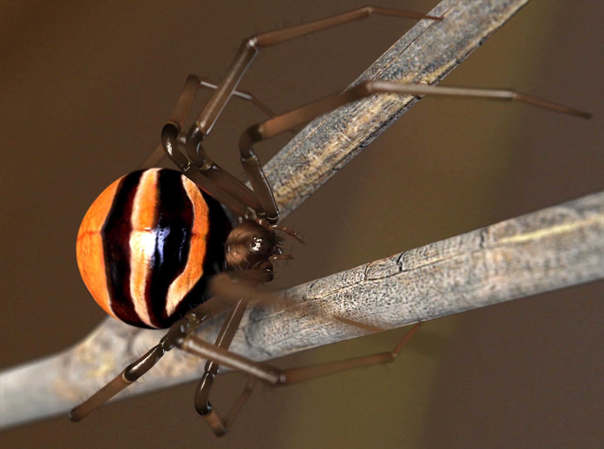 Zoltan korcsok spider2 2