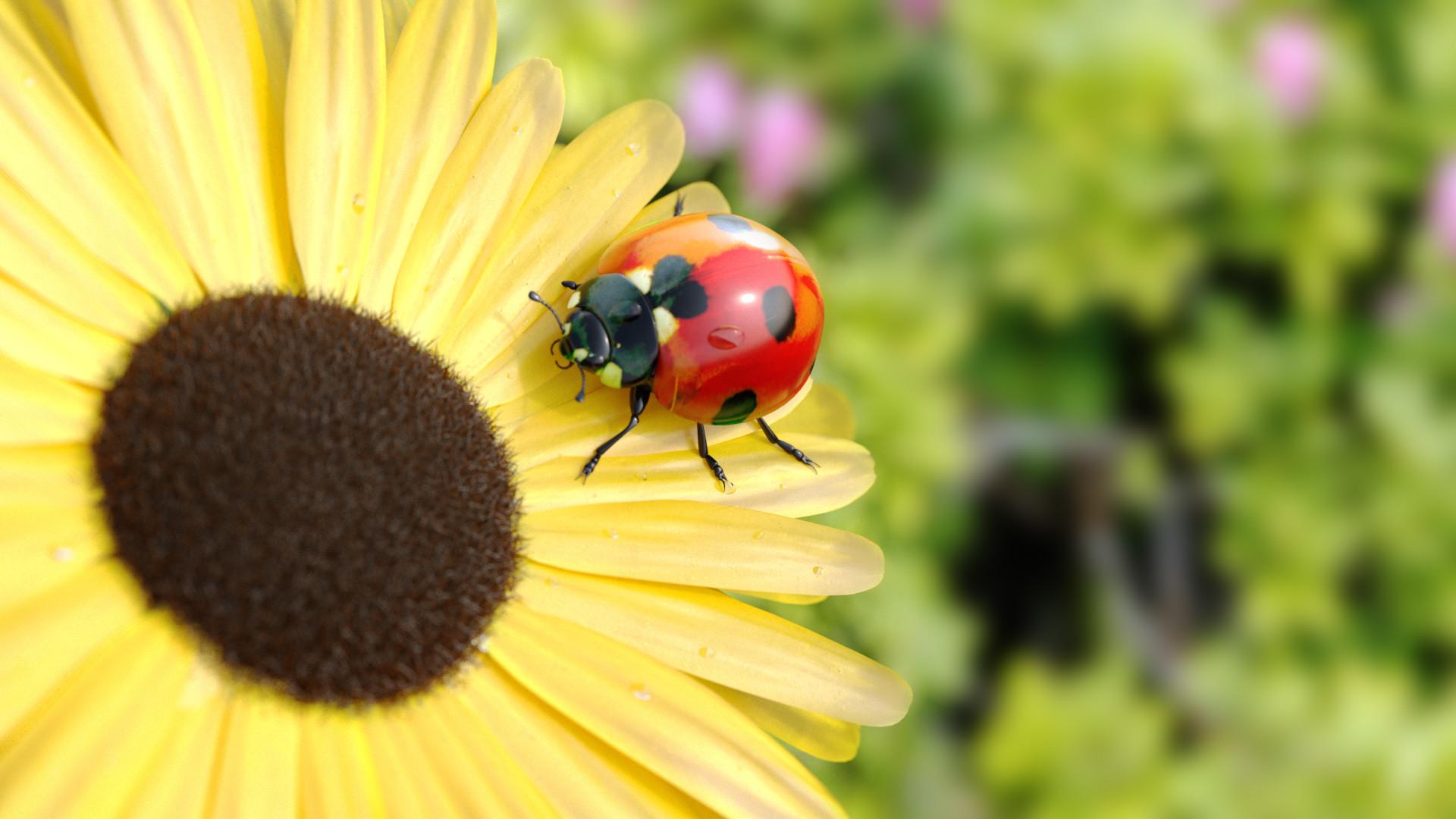 Shabeer mv ladybug3