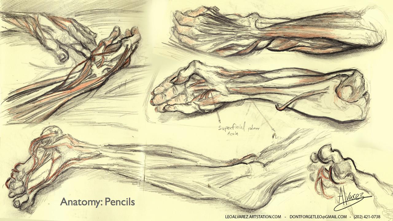 ArtStation - Anatomy studies, Leonel Alvarez