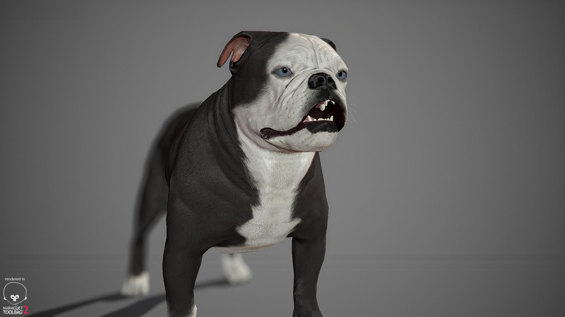 Alex lashko englishbulldog by alexlashko marmoset 19