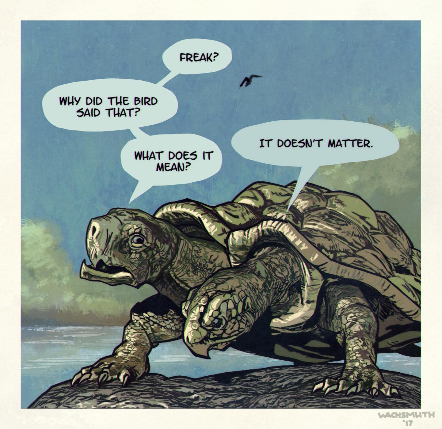 Artstation Siamese Turtle Dirk Wachsmuth