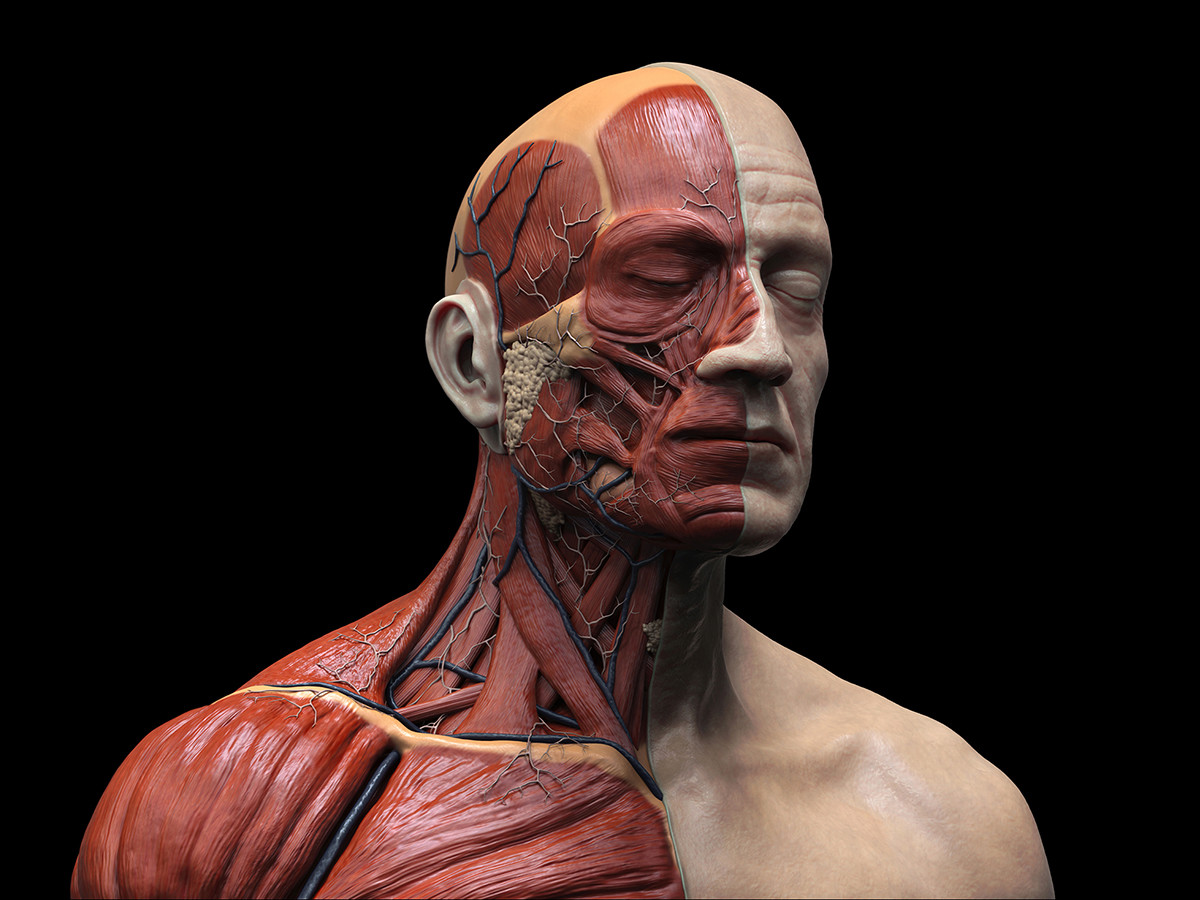 Artstation Human Head Anatomy Issam Kh