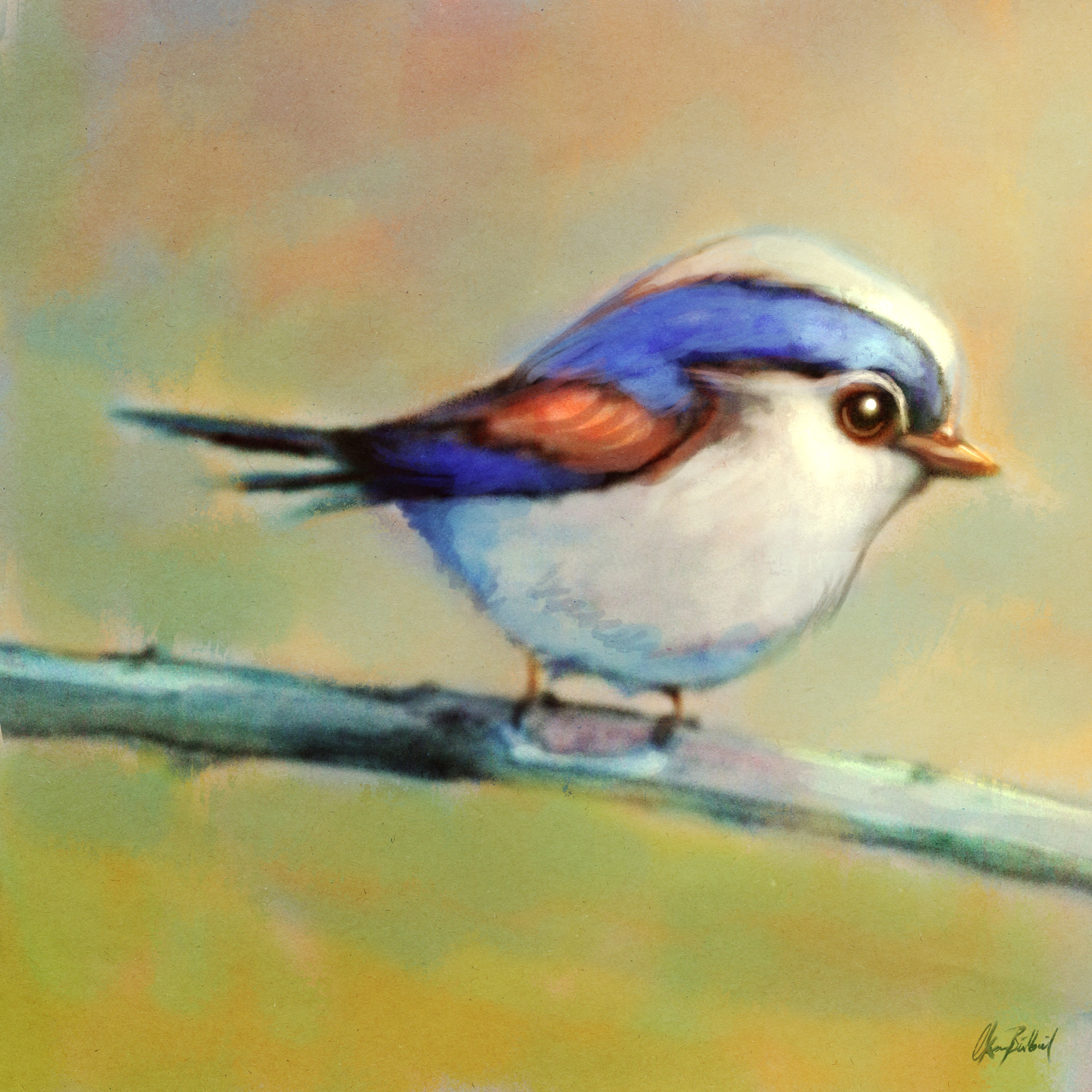 Okan bulbul littlebird v03