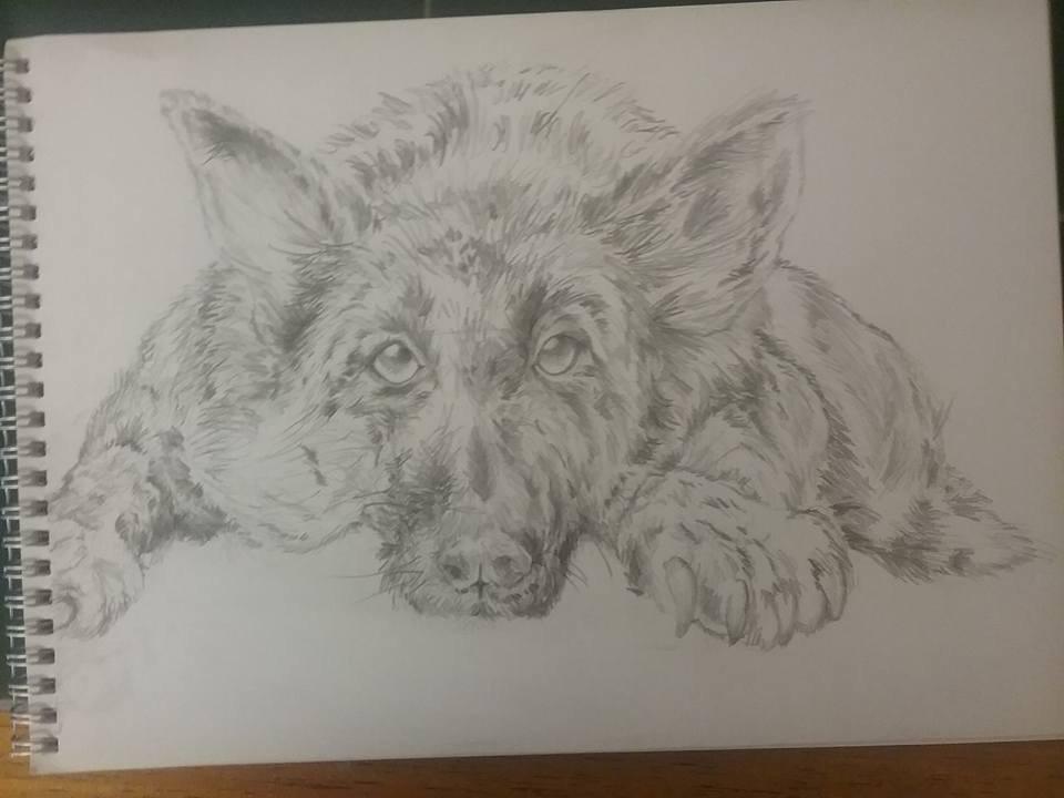 ArtStation - Drawing , Jamie Cook