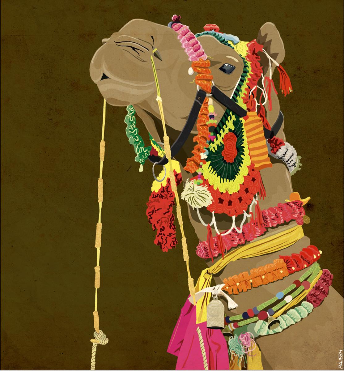 Rajesh sawant camel closeup