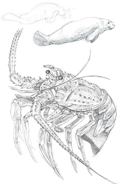Caleb prochnow sketch16