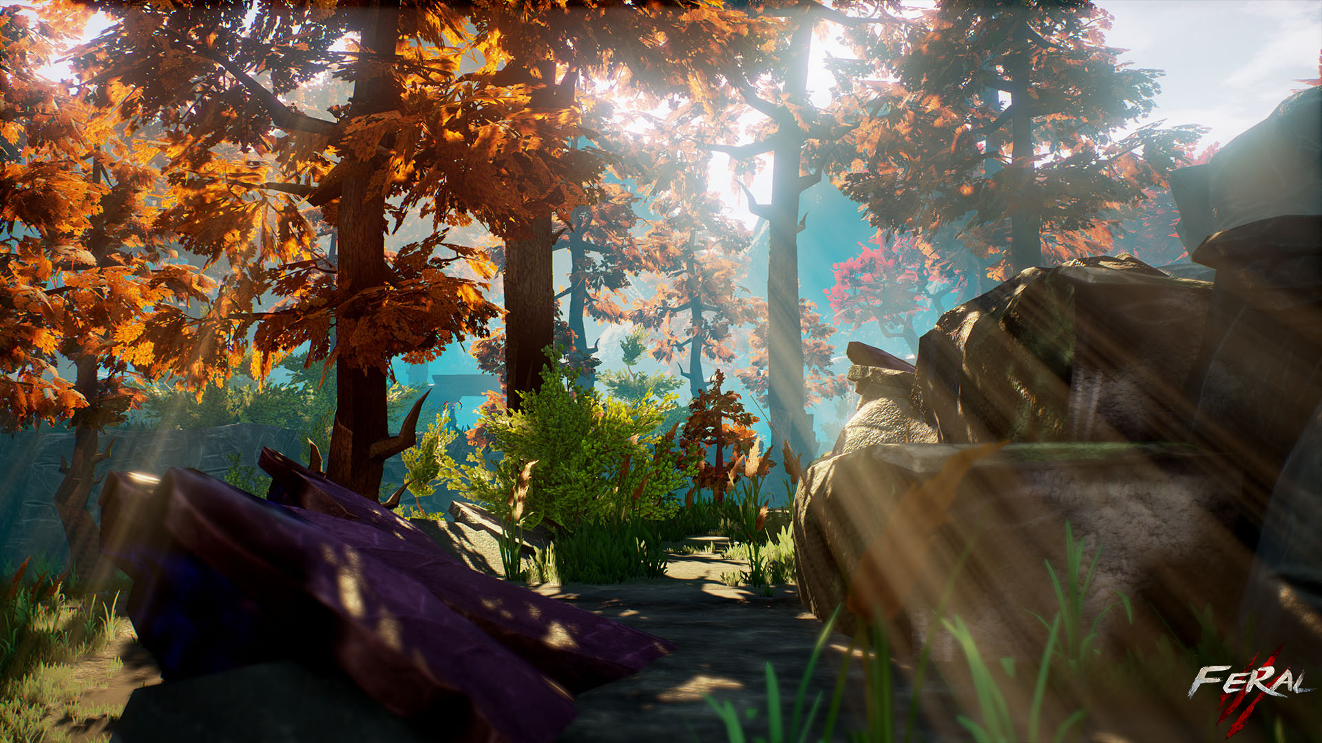 Chloe ravallec forest