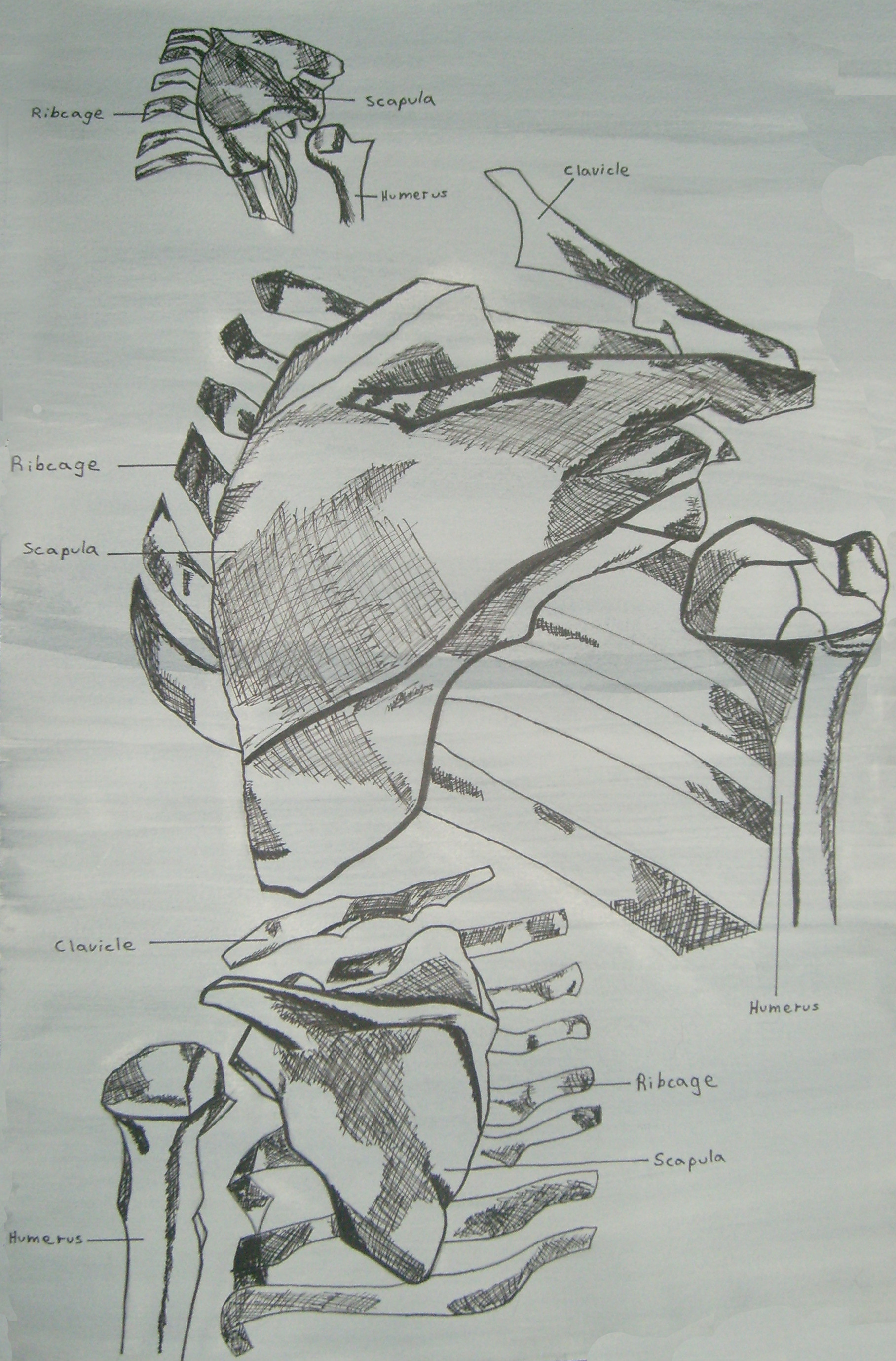 Antonio medina life drawing 011