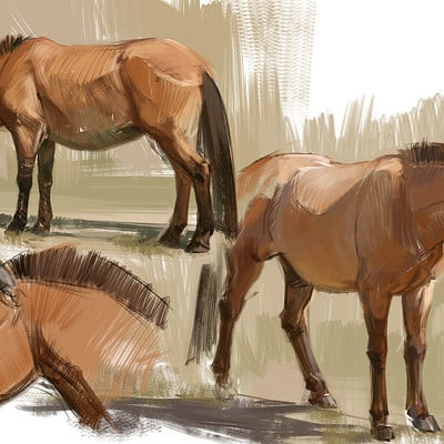 Jonathan kuo horse study