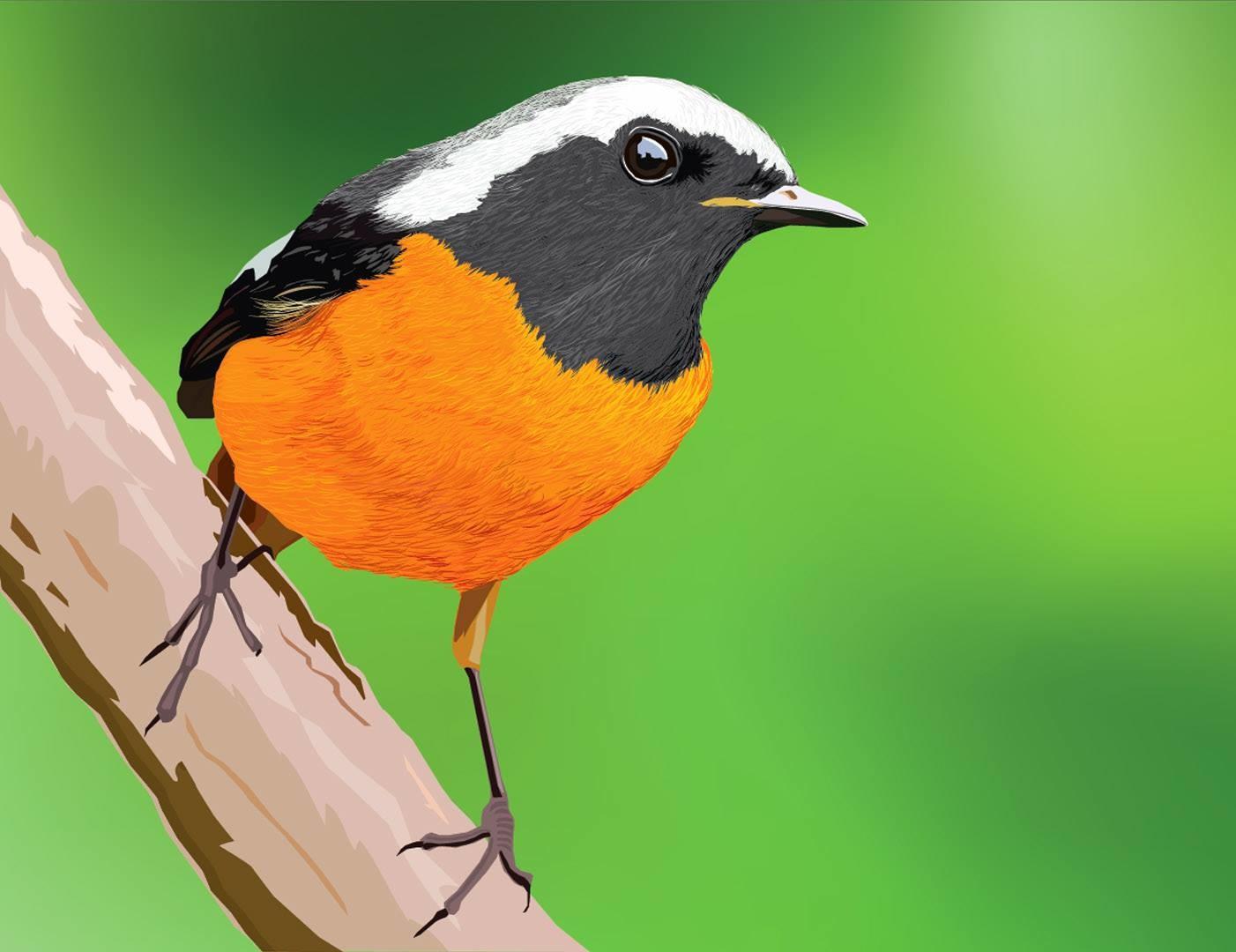 Rajesh sawant bird 2