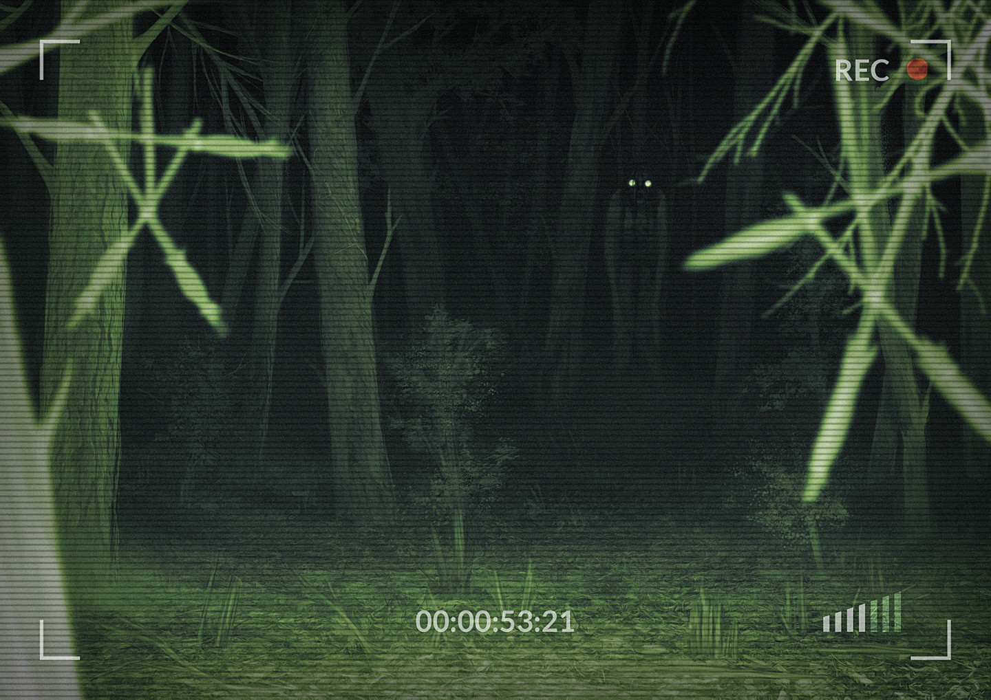 Blair Witch Project 2021 Stream