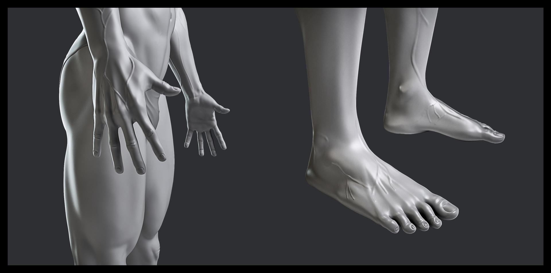 Husni qamhiyeh estudio anatomia detalle02