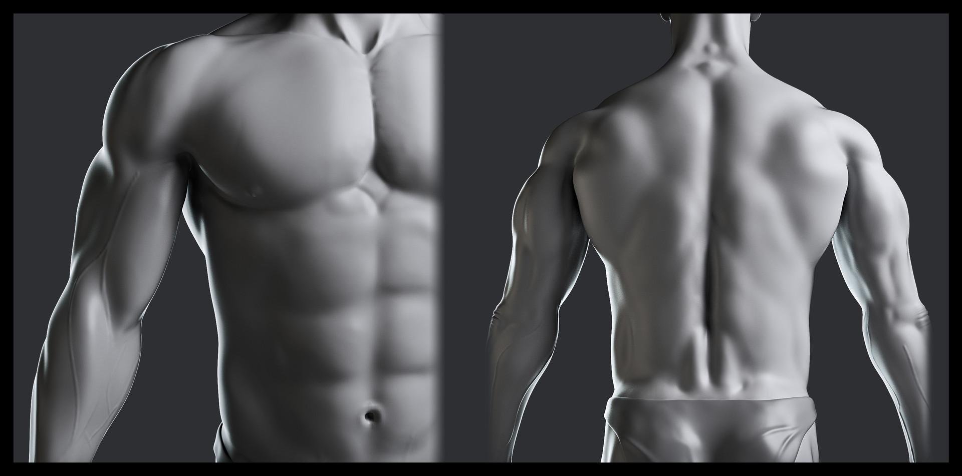 Husni qamhiyeh estudio anatomia detalle01