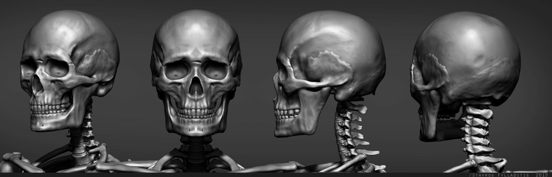 Stavros fylladitis skull v01