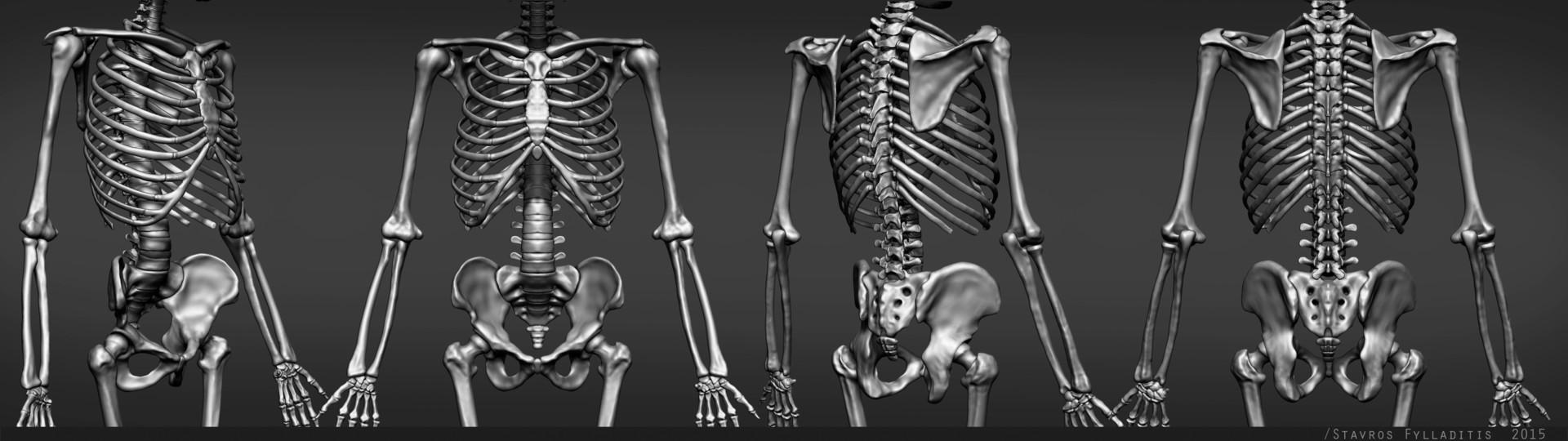 Stavros fylladitis torso v01