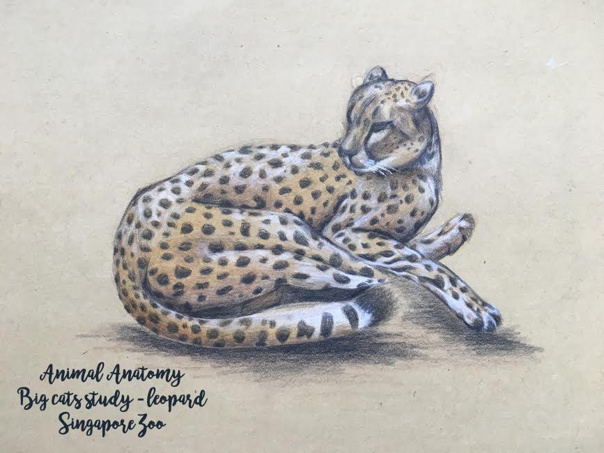 ArtStation - Animal Anatomy drawings, bevelyn wee