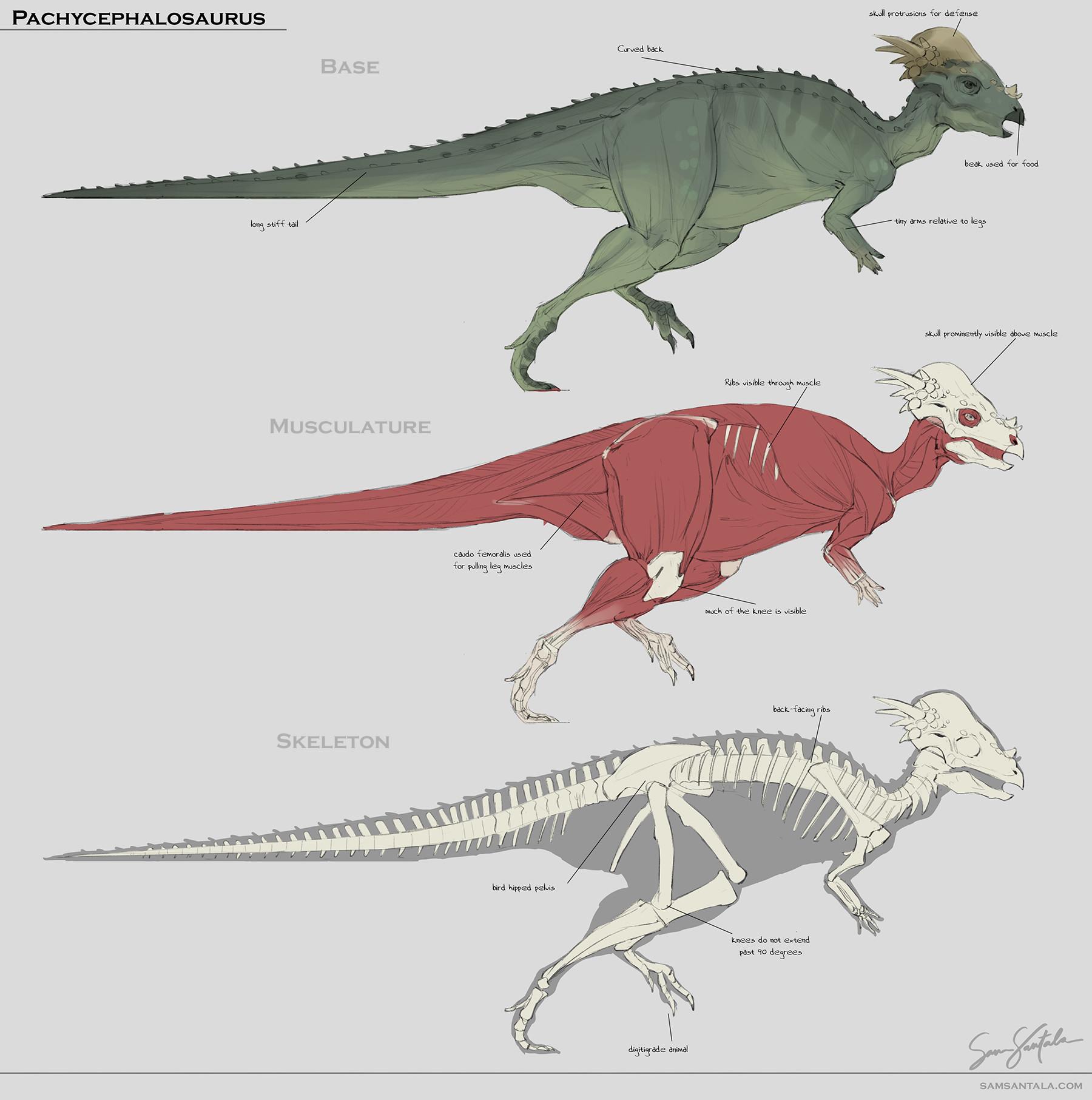 ArtStation - Dog/Dinosaur Studies, Sam Santala