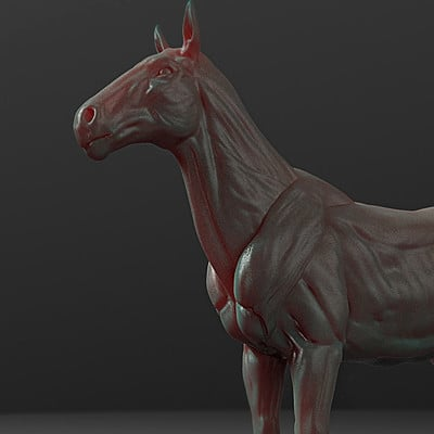 Ty ferrell horse