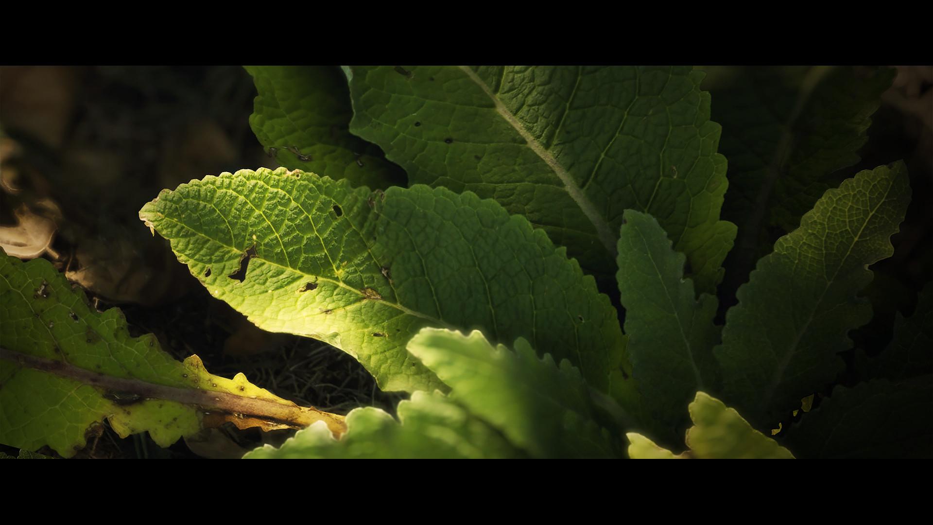 Joe garth plant leaf