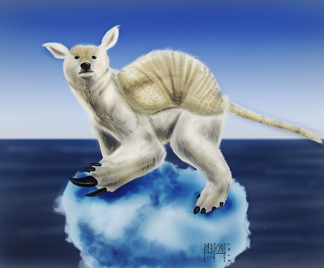 Midhat kapetanovic oso polar armadillo