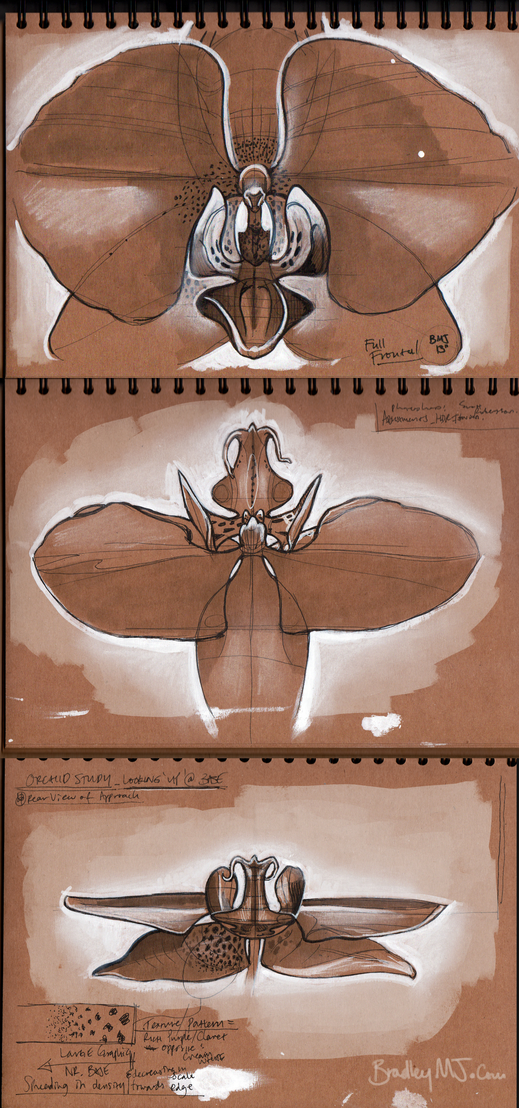 Orchid shape studies