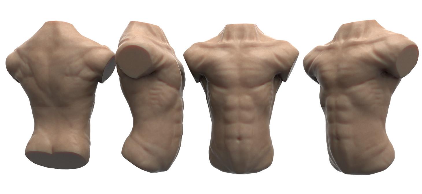 Matthew Brockman Anatomy Studies