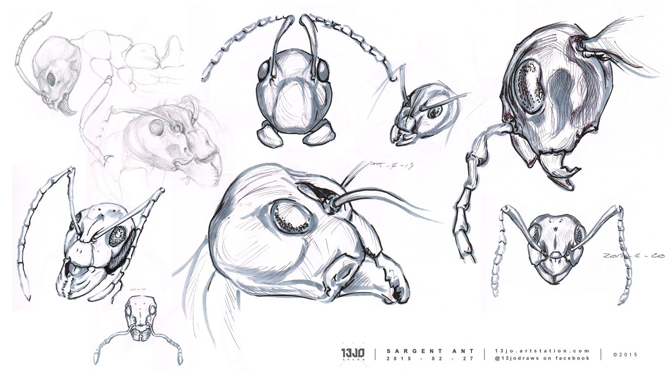 Sketch studies of reference material to get a better understanding of the ant's form and anatomy.