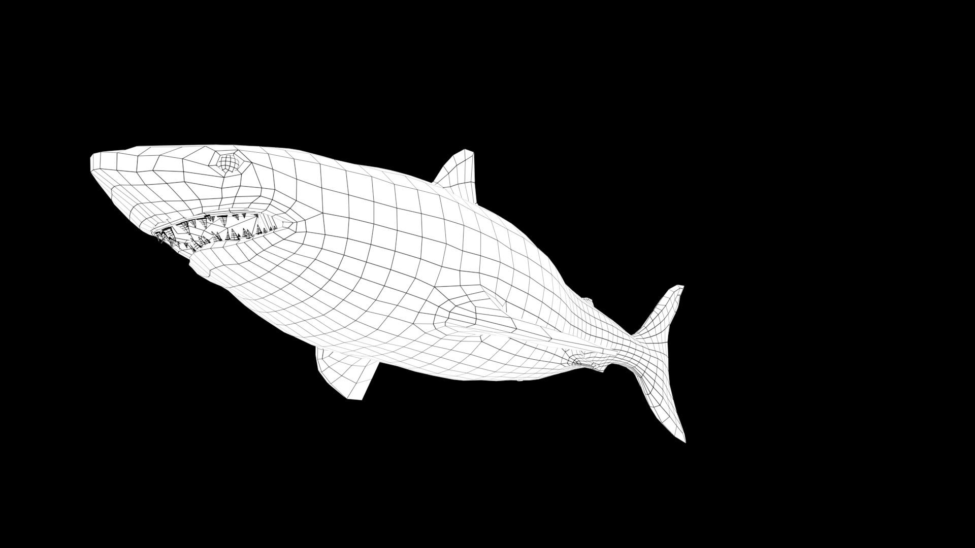 Oliver hopley sharkw 001