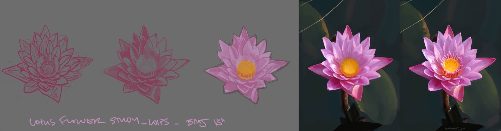 lotus flower study breakdown