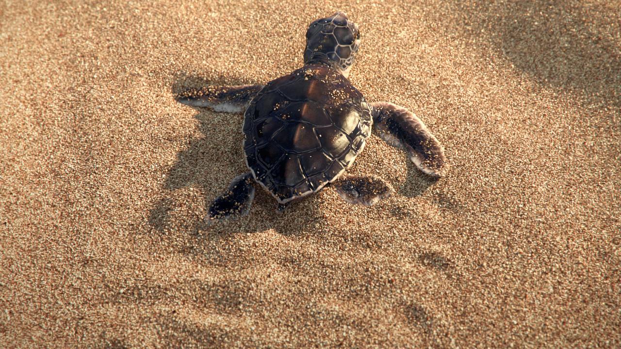 Cute Baby Green Sea Turtle