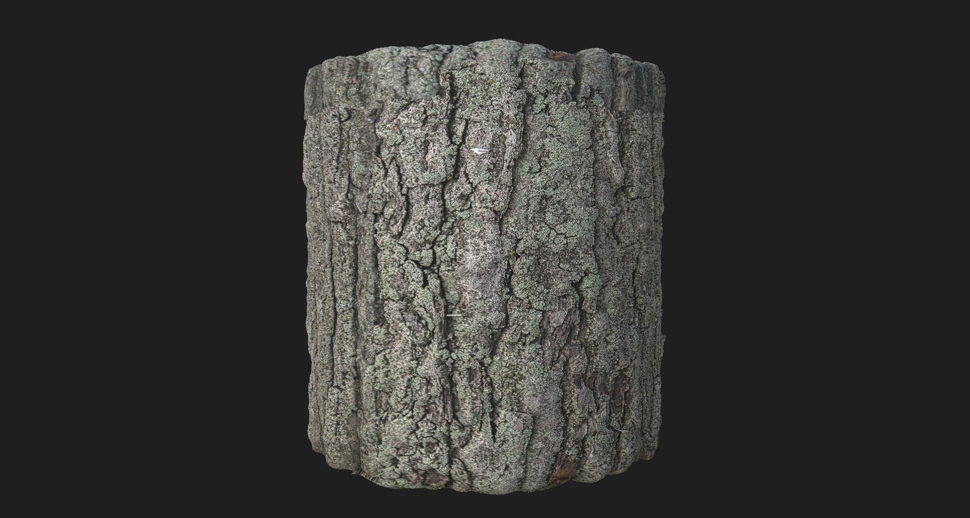 Martin pietras bark 01