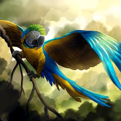 Jeff vehrs bluegold macaw lr