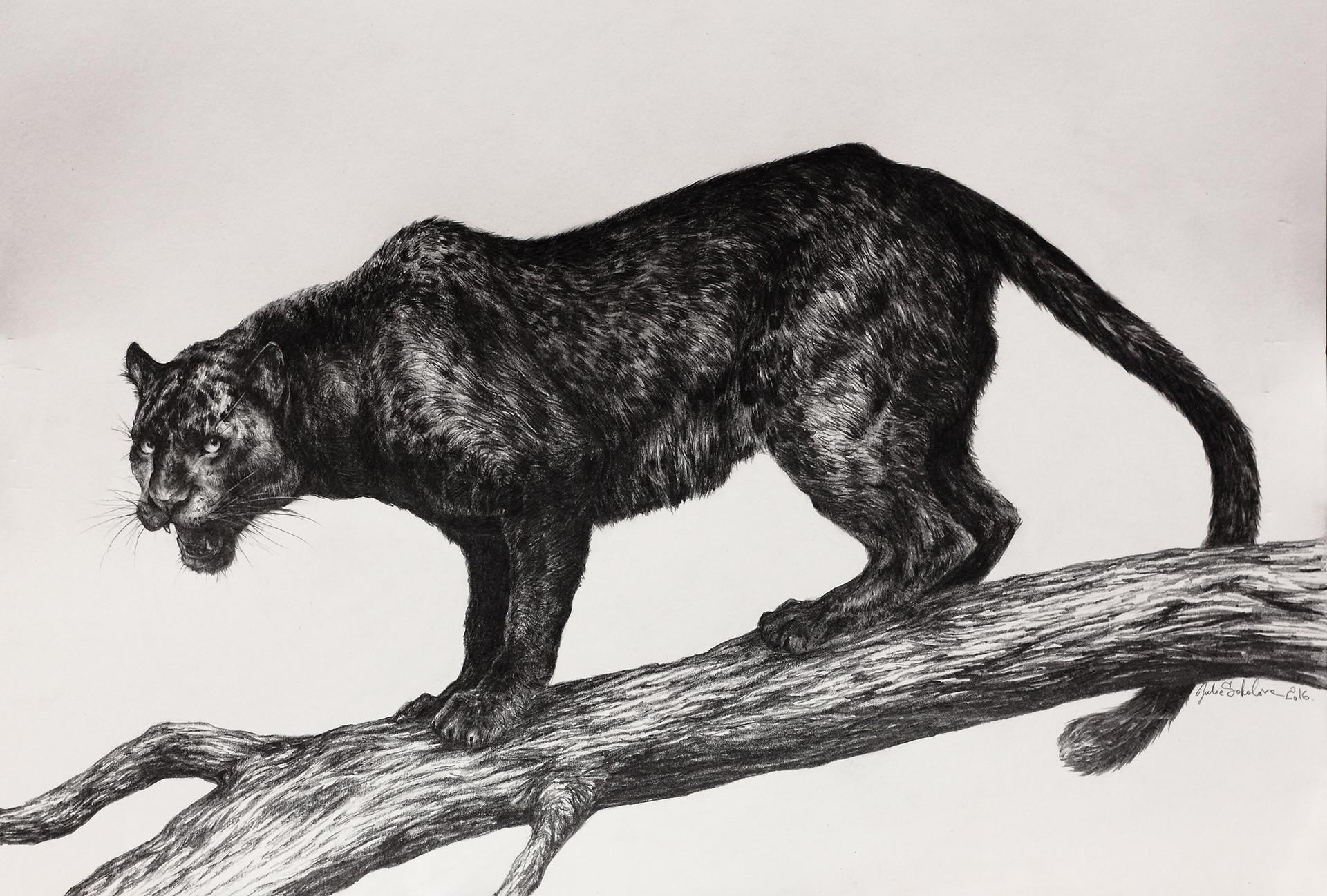 Красивые картинки карандашом пантера