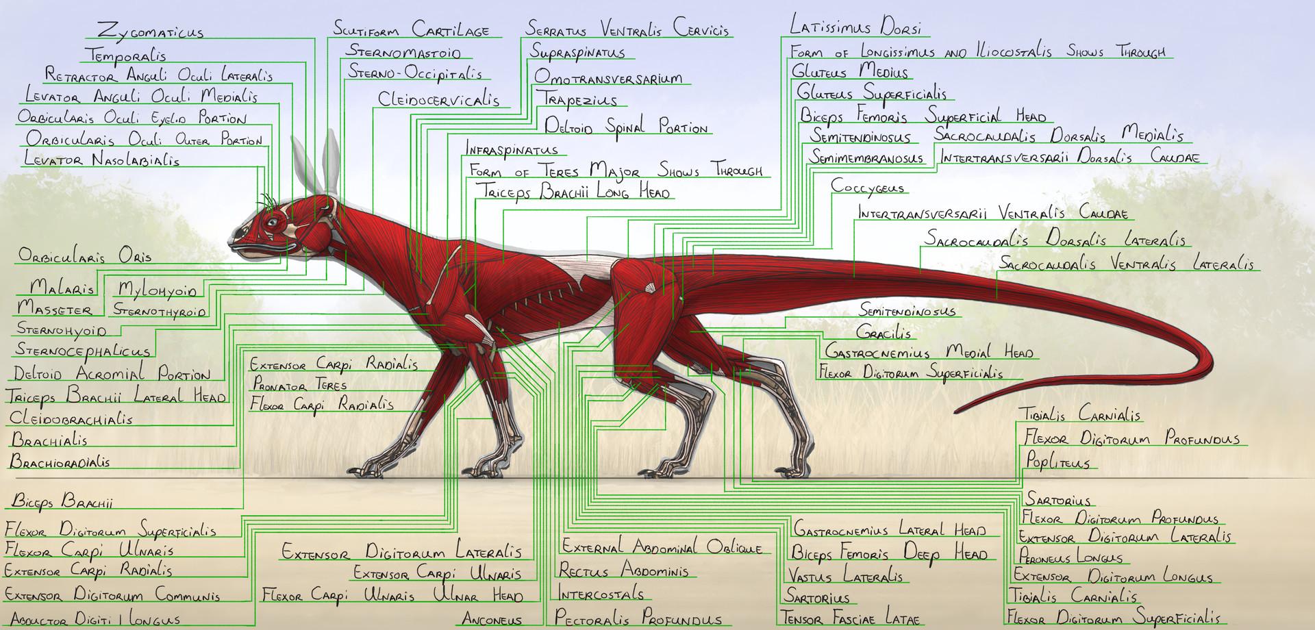 jordi van hees - Fantastical Tetrapod Anatomical Study