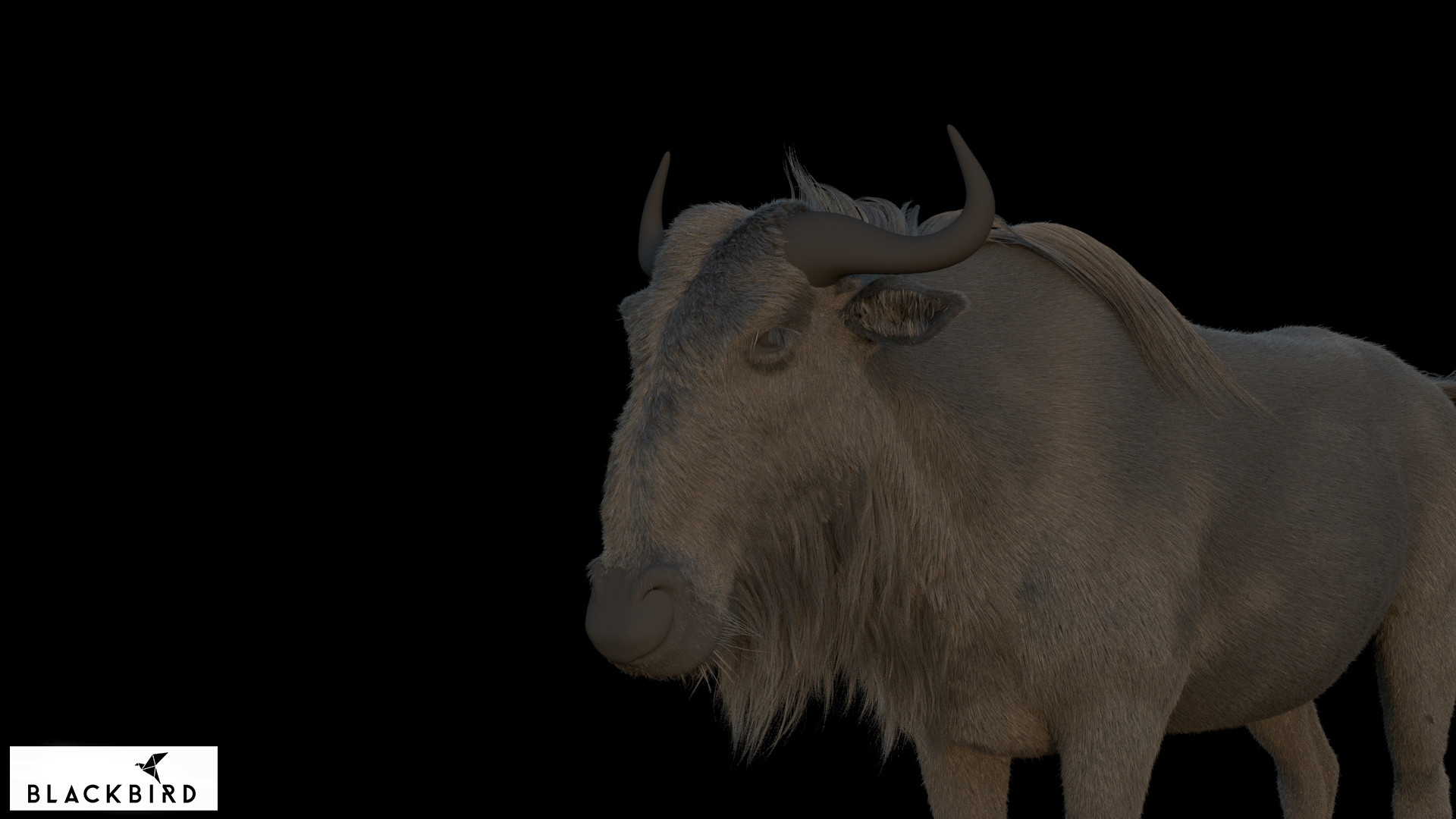 Antepost bull 02