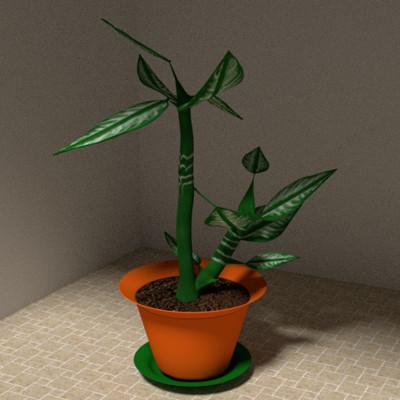 Miracles happen plant