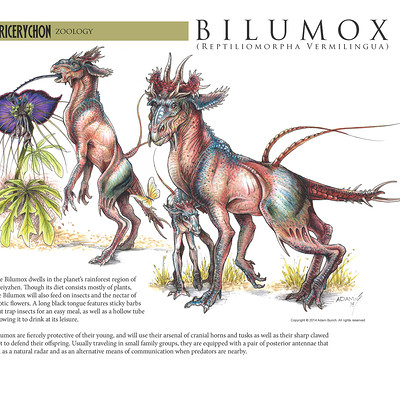Adam bunch bilumox species page small