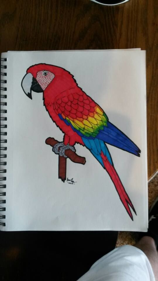 Jason guay parrot