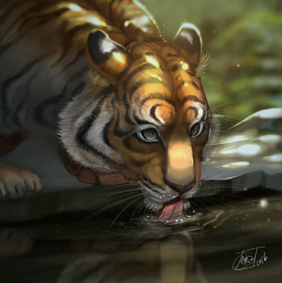 Annie doyon tiger