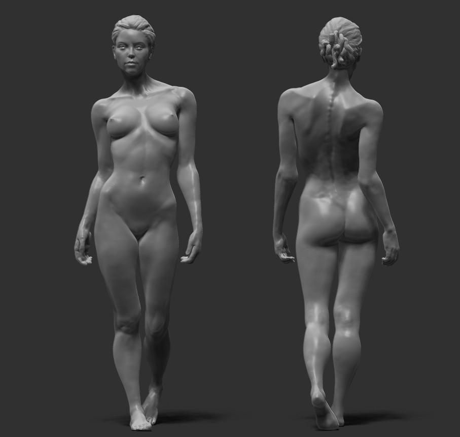 Unique Female Anatomy 3d Crest Anatomy And Physiology Biology