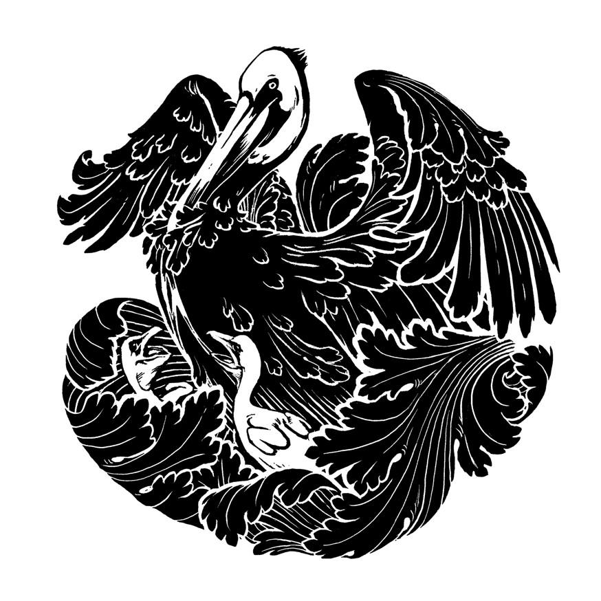 Tinctorium pelican