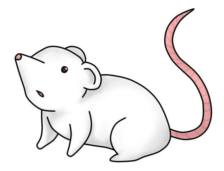 artstation schematic mouse lauren van den berg rh artstation com mouse brain schematic mouse schematic diagram