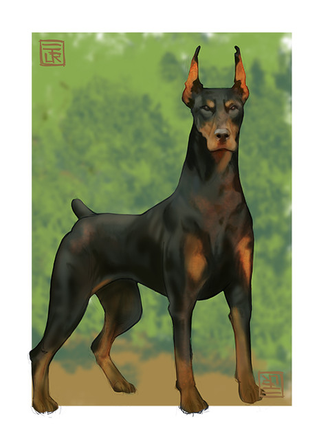 Jorge dias doberman small
